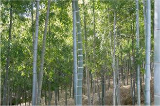 美しい竹林と共に手軽に日帰り天然温泉